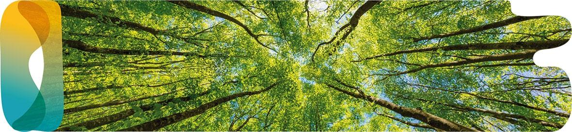 protectia-mediului-copy-min.jpg